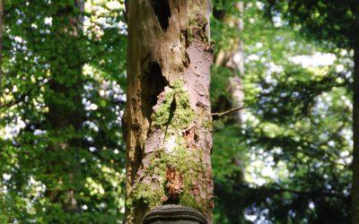 Mise en place d'une réserve forestière