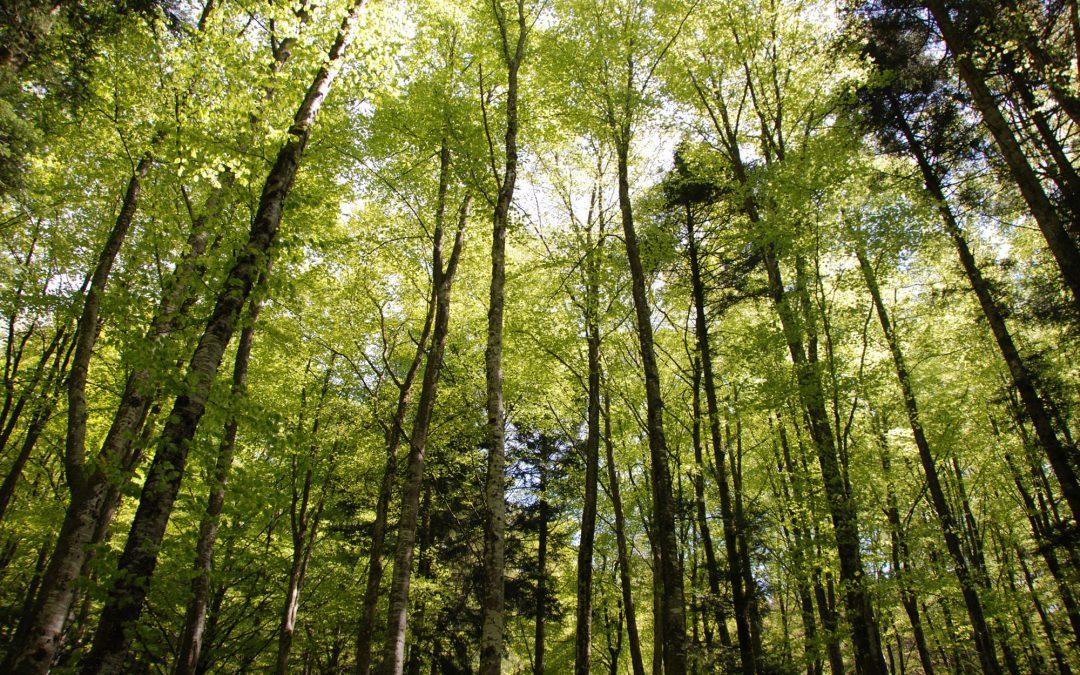 24 heures : «Quel est le rôle d'une forêt ? Deux visions s'affrontent.»