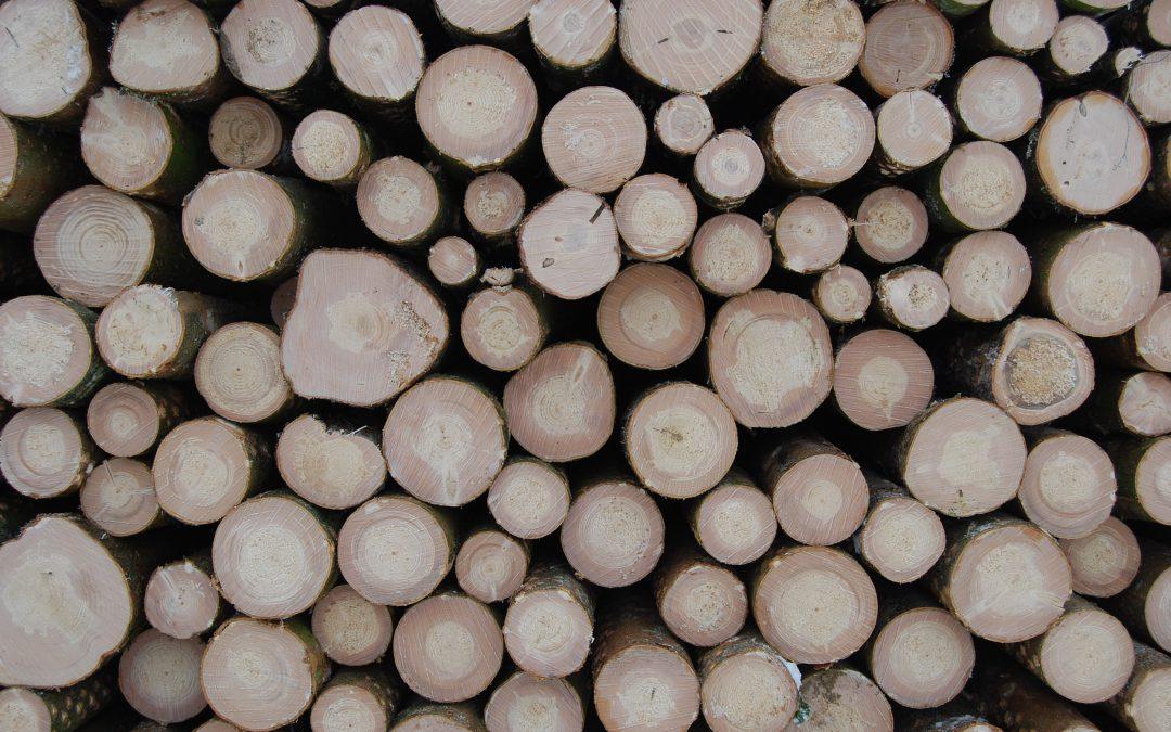 Diagnostic de la ressource bois dans le massif joratois