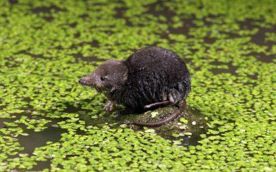 24 heures : «Plus de 70 espèces menacées dans le Jorat»