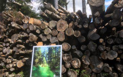 Soutien à la filière forêt-bois locale