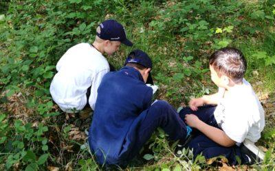 Les détectives en forêt