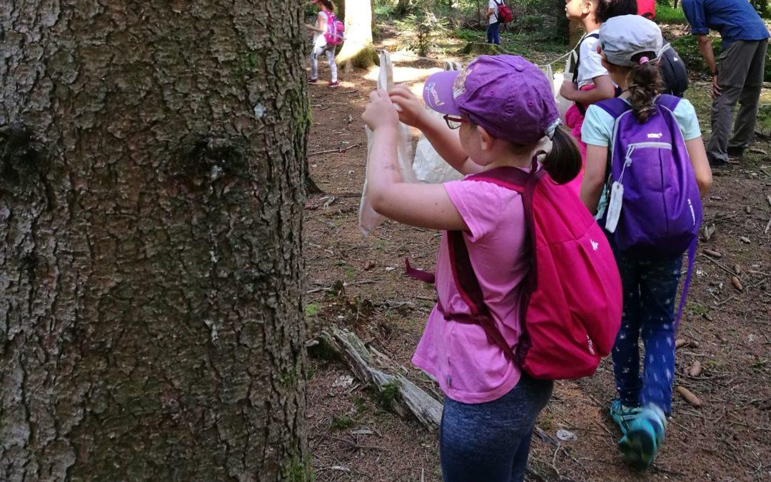 Les lutins découvrent la forêt