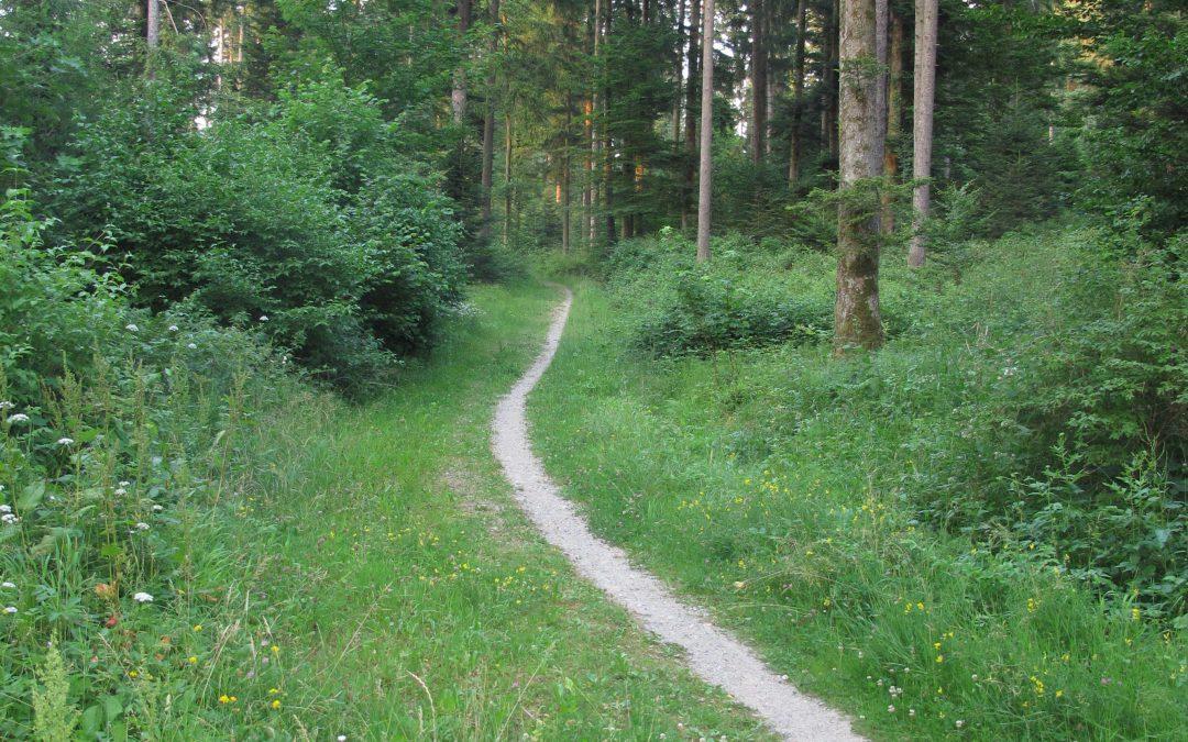 Le Régional : «Dessine-moi un parc : les citoyens ont été entendus»