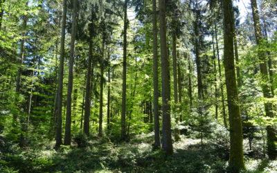 La Liberté : «Lausanne: le parc naturel du Jorat prend forme»