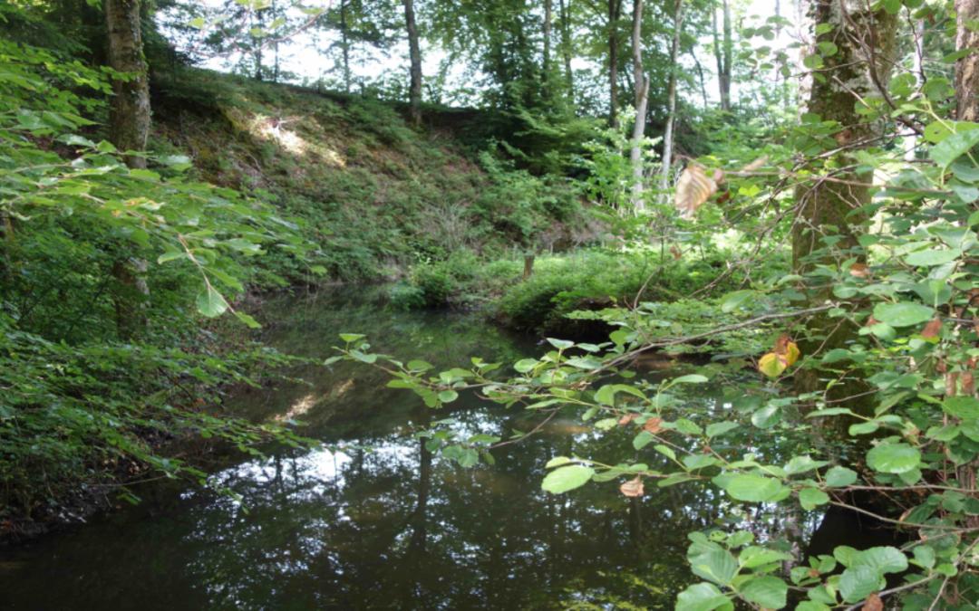Valorisation des milieux humides et crénaux