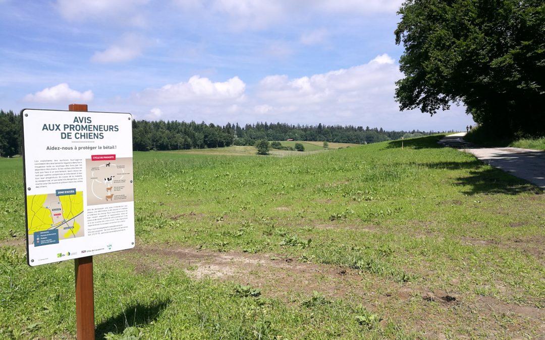 Le Régional : «Promener son chien peut tuer une vache»