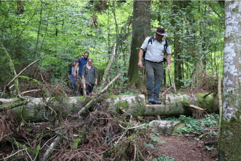 24 heures : «A Zurich, la forêt inspirant le parc du Jorat laisse faire la nature»