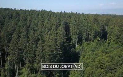 RTS Couleurs d'été : «VD : Le label suisse «les Bois du Jorat»