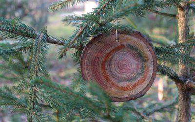 Noël en forêt 2019