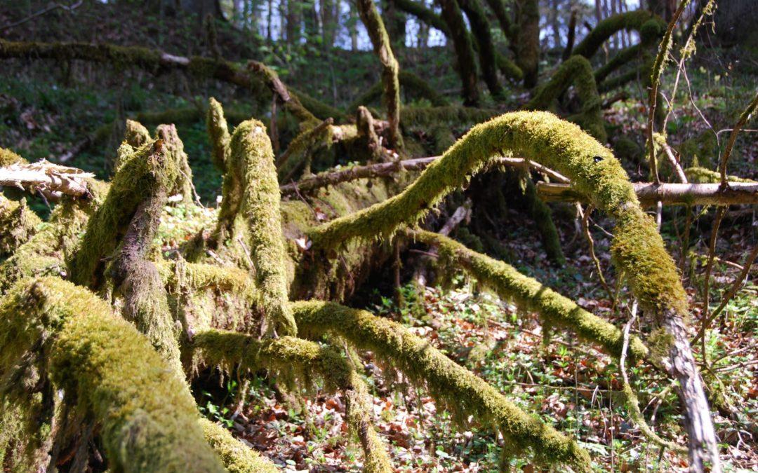 Promotion des mesures en faveur du bois mort