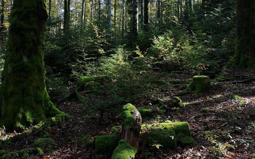 24 heures : «Le Parc du Jorat fait un bond vers sa réalisation»