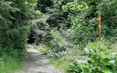 """24 heures : """"Vingt-sept oppositions au classement des forêts du Jorat"""""""